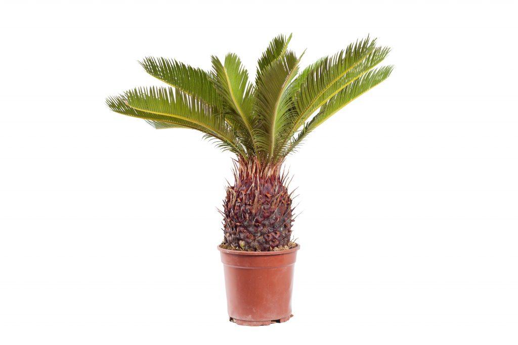 tropical foliage Sorrento fl