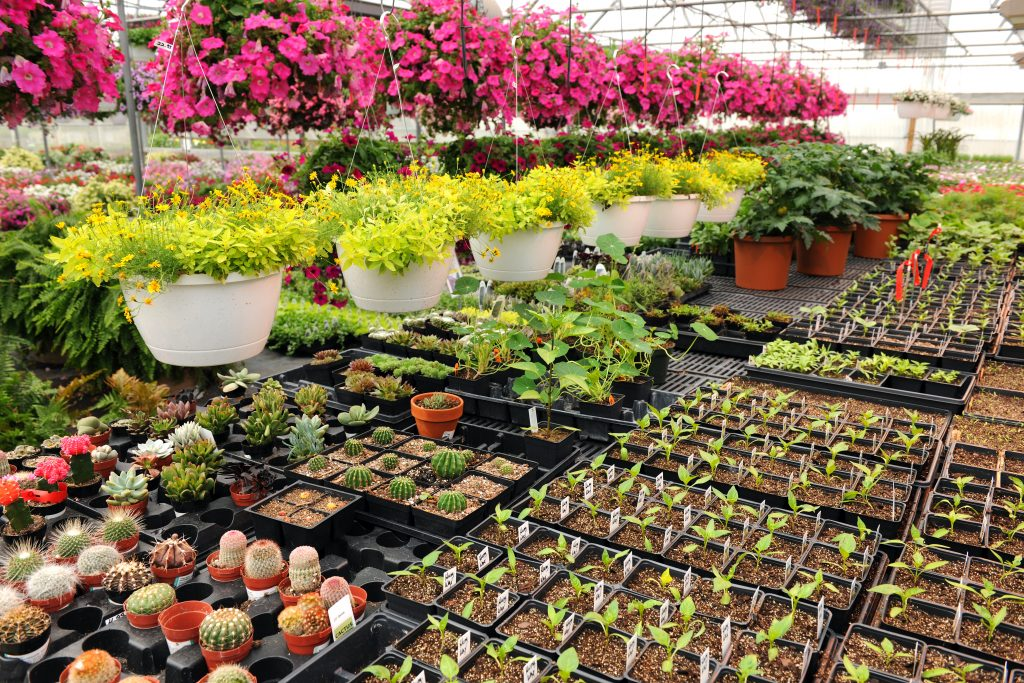 wholesale plant nursery Central Florida
