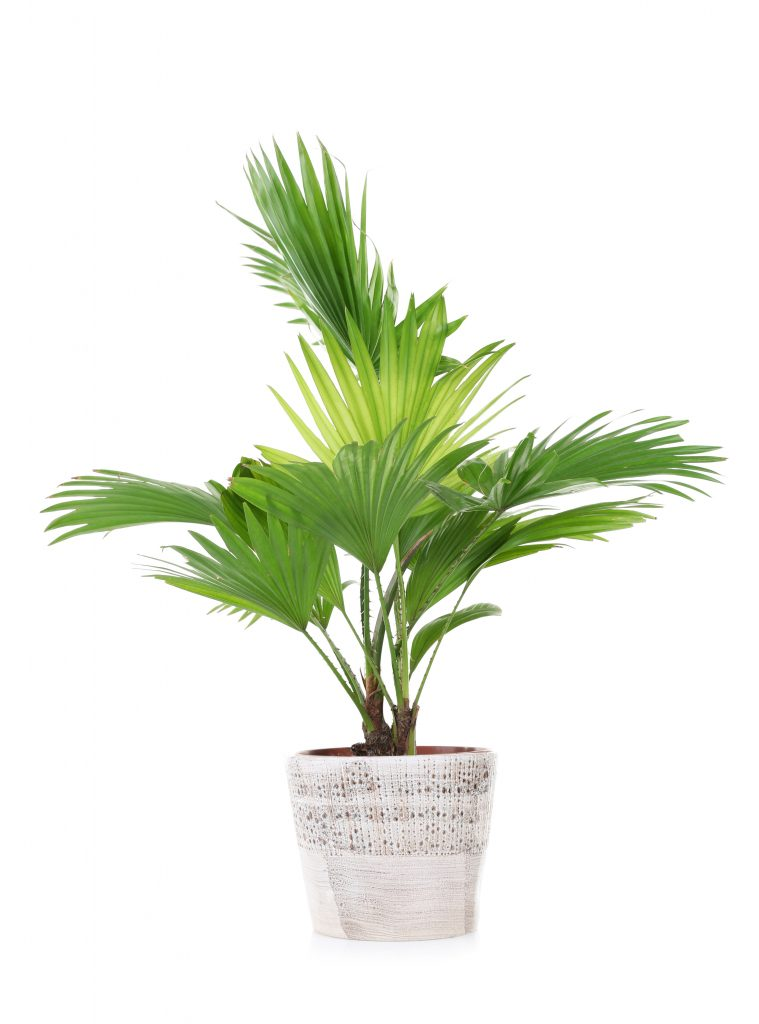 Wholesale Tropical Plant Nursery Sorrento FL