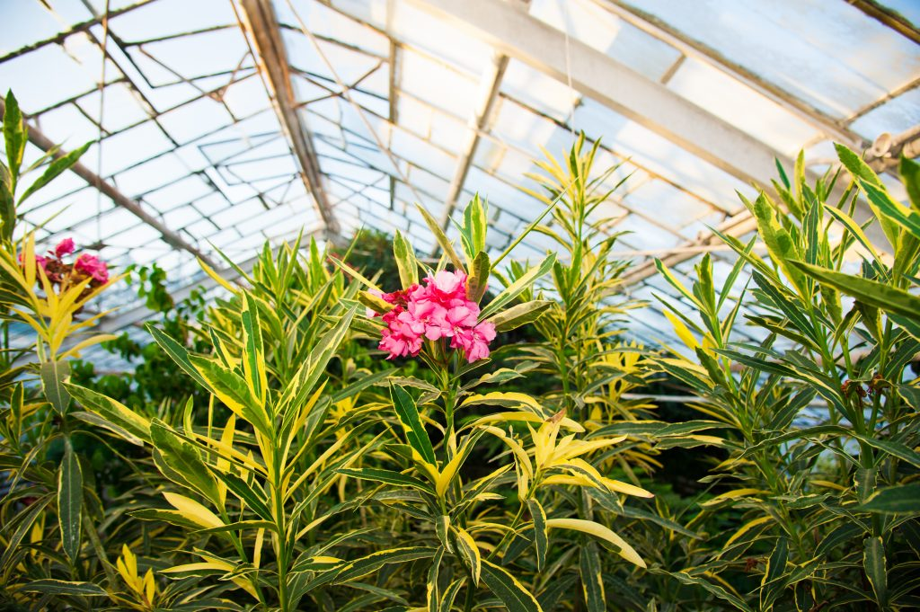 Plant Nursery Sorrento FL