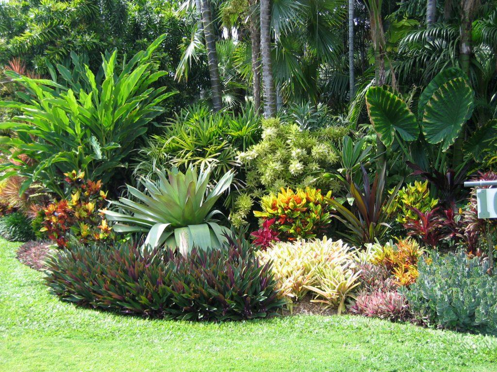 wholesale tropical foliage Sorrento FL