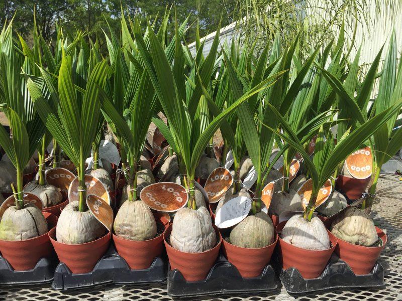 tropical plants atlanta ga
